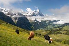 Alps in Switzerland. Eiger, Schreckhorn and neighborhood in Berner Alpen, Switzerland Royalty Free Stock Photo