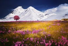 Alps, Tree, Snow Royalty Free Stock Images