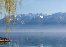 Alps Under the Willow. Weeping willow drapes a curtain on one of natures most beautiful scenes, the Alps Stock Photo