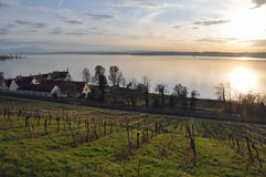 Alps and vineyard at Lake Constance Stock Image