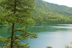 Alpsee湖 免版税图库摄影