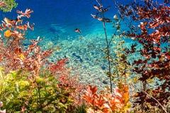 Alpsee sjö bavaria germany Arkivbilder