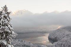 Alpsee sjö i vinterlandskap Arkivfoton