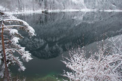 Alpsee sjö i vintertid med bergreflexion och träpir germany Arkivfoton