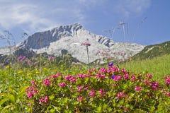 Alpspitze e rhodendron Immagine Stock