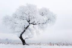 alpy objętych domowej sceny zimy małe szwajcarskie śnieżni lasu Fotografia Stock