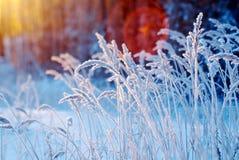 alpy objętych domowej sceny zimy małe szwajcarskie śnieżni lasu Obrazy Stock