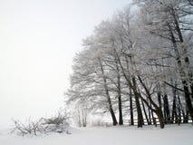 alpy objętych domowej sceny zimy małe szwajcarskie śnieżni lasu Zdjęcia Stock