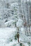 alpy objętych domowej sceny zimy małe szwajcarskie śnieżni lasu Zdjęcia Royalty Free