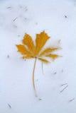 alpy objętych domowej sceny zimy małe szwajcarskie śnieżni lasu Obrazy Royalty Free