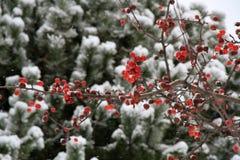 alpy objętych domowej sceny zimy małe szwajcarskie śnieżni lasu Zdjęcie Royalty Free