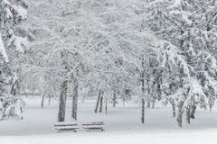 alpy objętych domowej sceny zimy małe szwajcarskie śnieżni lasu Dwa drzewa w parku zakrywającym z śniegiem i ławki obrazy royalty free