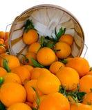 Alqueire de laranjas orgânicas fotos de stock