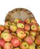 Alqueire de maçãs orgânicas de Fuji fotografia de stock royalty free