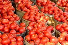 Alqueires de tomates imagens de stock