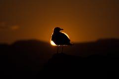 Alrededor del Sun Imagen de archivo