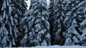 Alrededores hermosos de invierno mientras que conduce almacen de metraje de vídeo
