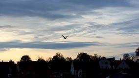 Als een vogel in de hemel Stock Foto's