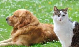 Als kat en hond Stock Fotografie