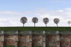 Als paardebloemenbomen in het Park van Peterhof Royalty-vrije Stock Foto's
