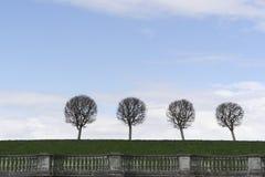 Als paardebloemenbomen in het Park van Peterhof Royalty-vrije Stock Afbeeldingen