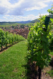 Alsace. A typical vineyard lanscape in the north east of France Royalty Free Stock Photos