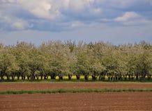 Alsace Frankrike Fotografering för Bildbyråer