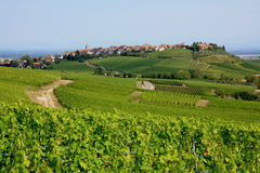 Alsace landscape. A small village (Zellenberg) surrounded by vineyards in Alsace, France Stock Photos