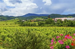 Alsace landscape, France. Alsace landscape with village and vineyards by cloudy day, France royalty free stock image