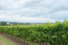 Alsace landscape and vinewyard Stock Image