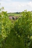 Alsace landscape and vinewyard Stock Photo