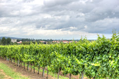 Alsace landscape and vinewyard Stock Images