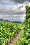 Alsace landscape and vinewyard Royalty Free Stock Image