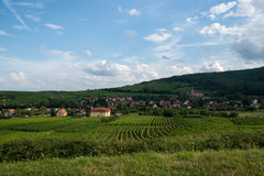 Alsace landscape and vinewyard Stock Photos