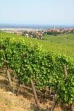 Alsace liggande Royaltyfria Foton