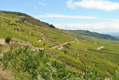 Alsace vineyards. The vineyards on the hills in the Alsace region, Kaysersberg, France stock photo