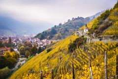 Alsace vineyards in autumn, Thann, France stock image
