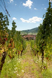 Alsace wine village Royalty Free Stock Image