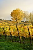 Alsace wineyard Stock Images