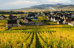 Alsace wineyard. Typical colorful autumnal scenery in Alsace, France stock images