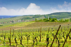 Free Alsacian Vineyards At Bruche Valley Stock Photo - 22548530