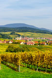 Alsacien landscape with yellow vineyards Stock Photo