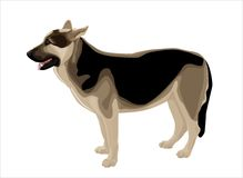 Alsatian shepherd Royalty Free Stock Photography
