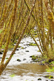 Alsea River Stock Images
