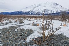 Alsek Valley desolated landscape and a small tree. Alsek Valley desolated landscape in Kluane National Park, Yukon stock photos
