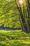 Alskog i Rumänien Arkivfoto