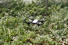 Mini drone flying in a greenhouse on a watermelon crop. Also in agriculture, utility is sought for drones. To begin with, you have to set the flight techniques stock image