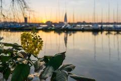 Alster segelbåtHamburg solnedgång royaltyfri bild