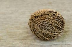 Alstonia scholaris seed on olden wood background Stock Photo