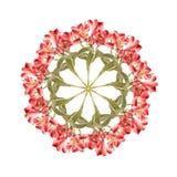 Alstroemaria kwiatu kolaż Zdjęcia Royalty Free